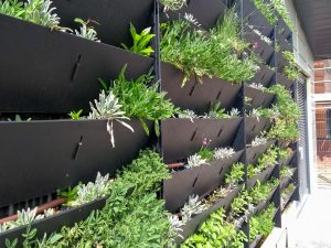 the active classroom's living wall